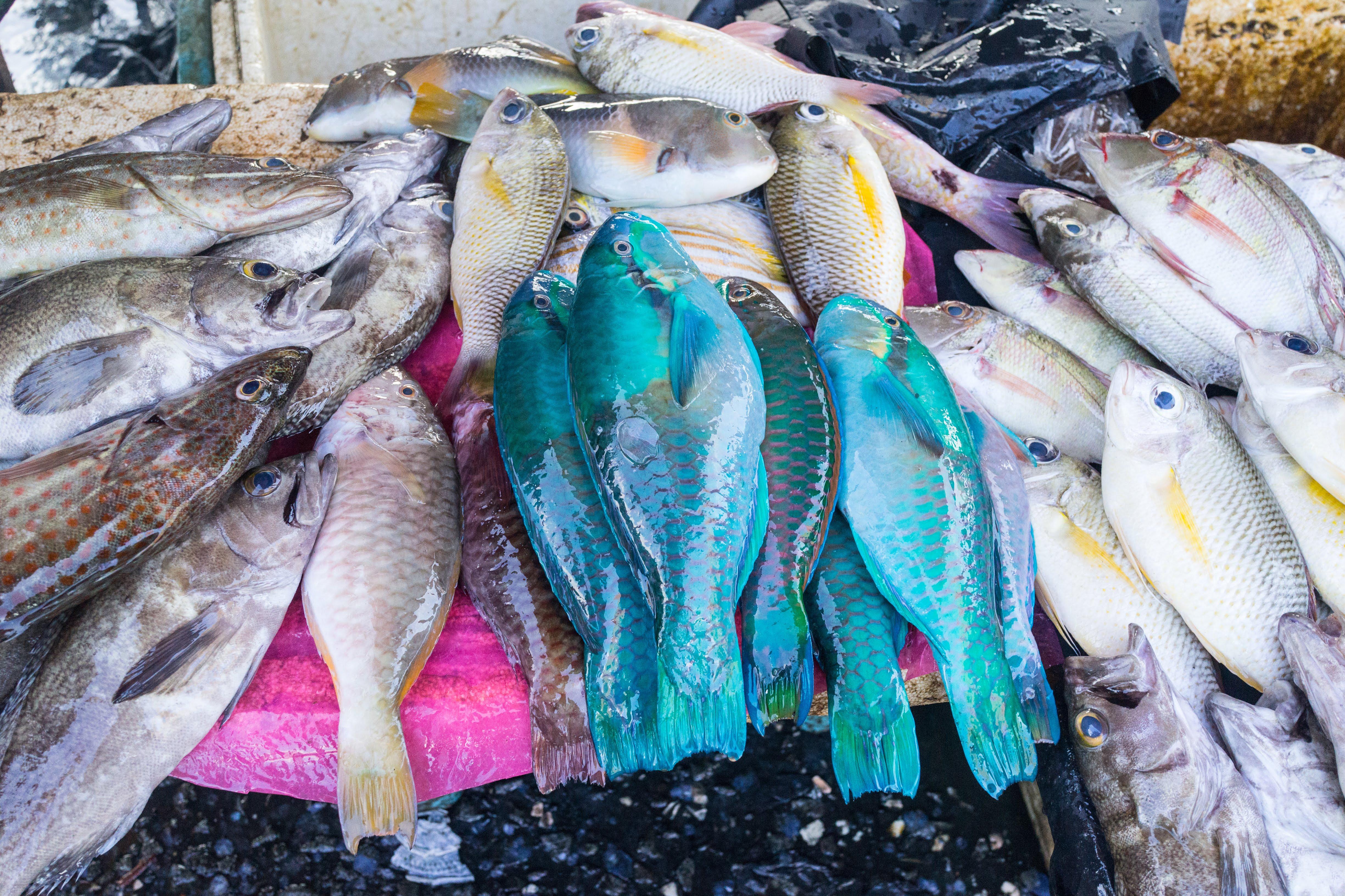 Semporna Fish Market