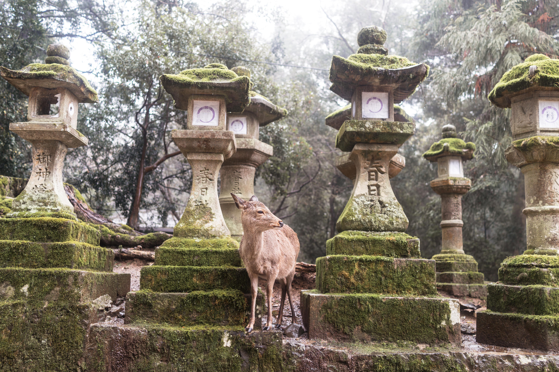 Kasuga Taisha Nara Temples