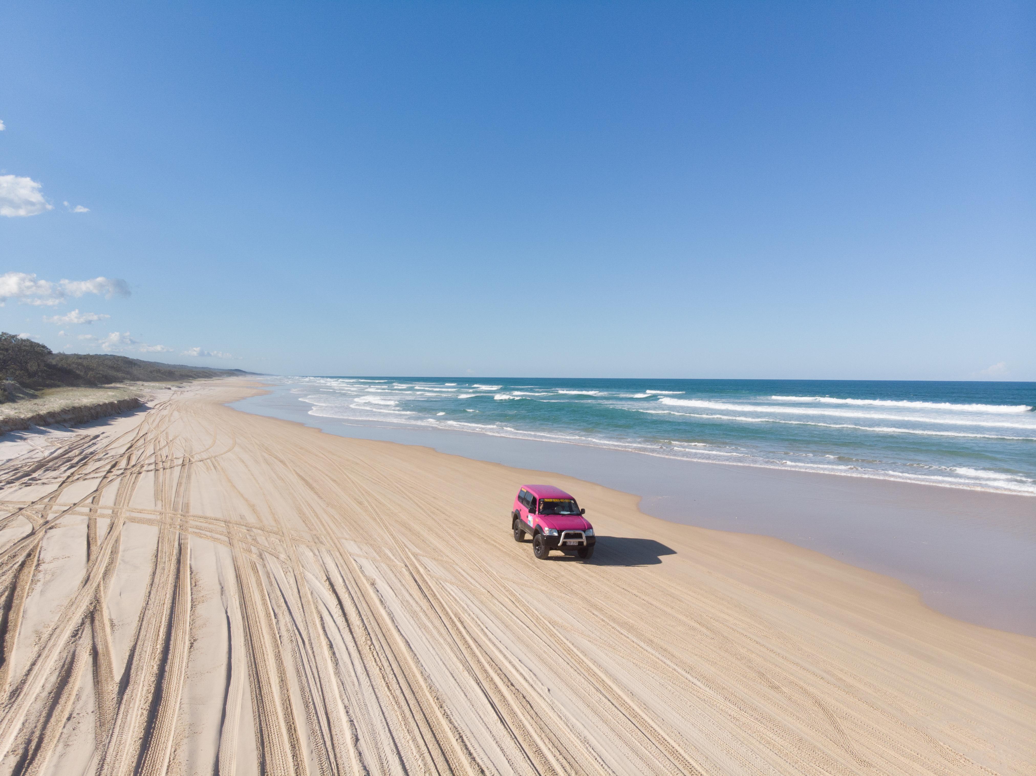 Fraser Island Fraser Dingo