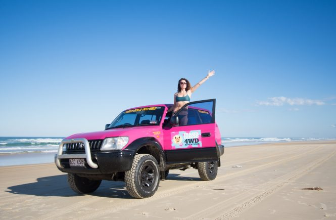 Fraser Island 4WD Fraser Dingo