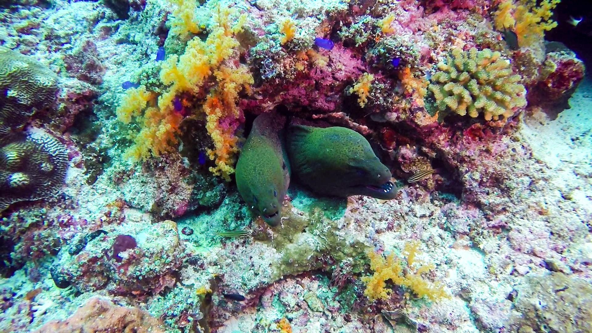 Diving Banda Islands