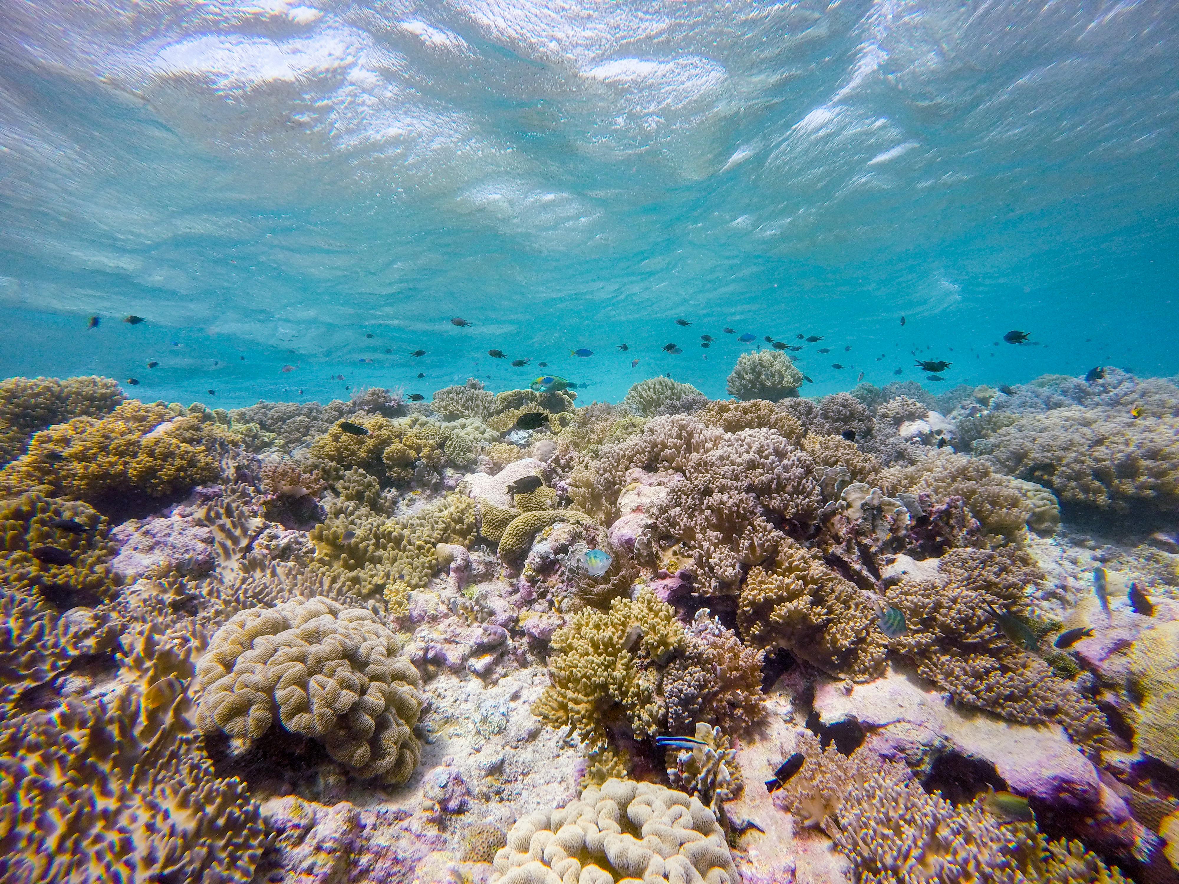 Diving Biak Padaido Islands