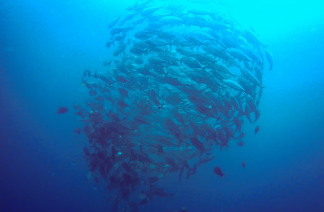 Diving Wakatobi